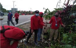 DPC PDIP Katingan Tanam 3.000 Pohon