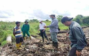 Plt Kadis Pertanian Barito Utara Tinjau Pelaksanaan Program Optimalisasi Lahan Rawa