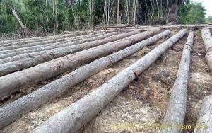 JPIK Apresiasi Polri Ungkap Pembalakan Kayu Kalimantan