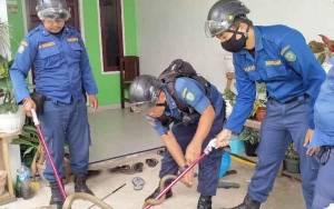 Dinas Damkar dan Penyelamatan Kotim Evakuasi Ular Kobra yang Masuk Rumah Warga