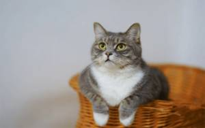 Jangan Beri Nasi Kepada Kucing, Ini Alasannya