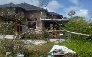 Cuaca Ekstrem, Warga Gunung Mas Diminta Waspada Pohon Tumbang