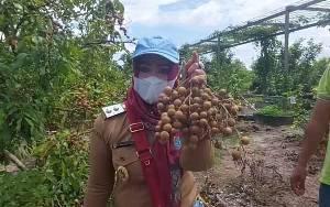 Usaha Perkebunan Rakyat Perwujudan Ekonomi Cerdas