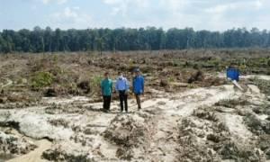 Peremajaan Sawit Rakyat di Desa Pandran Permai Ditargetkan 770 Hektar