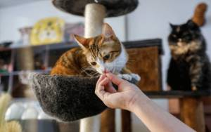 Kafe Kucing di Dubai untuk Lepas Stres, juga Tempat Adopsi Anak Bulu