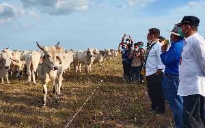 Bupati: Sukamara Ranch Banyak Berikan Peluang Bagi Masyarakat
