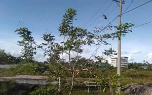 Sebagian Lampu PJU di Jalan Soekarno-Hatta Kasongan Tidak Nyala