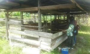 Dinas Pertanian Terus Dampingi dan Bina Peternak