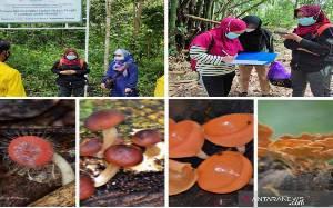 Taman Biodiversitas di Kalsel Miliki Ragam Jamur Makroskopis
