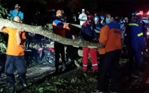 Pohon Tumbang di Hutan Kota Kuala Kapuas Timpa 2 Warga Hingga Harus Dilarikan ke Rumah Sakit