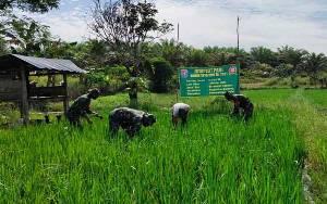 Babinsa Berambai Makmur Bantu Petani Dukung Program Ketahanan Pangan