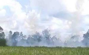 Polisi Selidiki Kebakaran Lahan di Lingkar Selatan Sampit