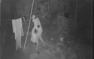 VIDEO: Detik-detik Aksi Maling Ayam Terekam CCTV