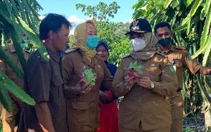 Wabup Kotim Serap Aspirasi Petani Buah Naga di Desa Kandan, Harapkan Produksi Terus Meningkat