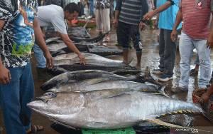KKP Tetapkan 5 Koridor Logistik Untuk Akses Perikanan Indonesia Timur