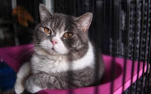 Tak Bisa Seenaknya Membeli Kucing, Ada Hukum Jual Beli Kucing