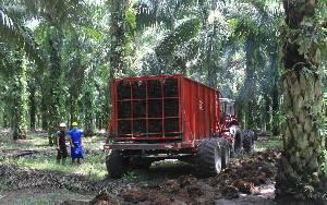 Gapki: Industri Sawit Indonesia Bertransformasi ke ESG