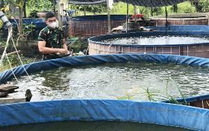 Dukung Program Ketahan Pangan, Prajurit Kodim Muara Teweh Kembangkan Budidaya Ikan