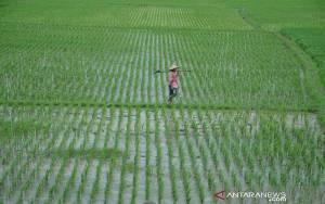 Peneliti: Percepat Penerapan Teknologi Digital Dalam Sektor Pertanian
