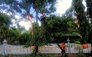 BPBD Kobar Pangkas Ranting Pohon Rawan Tumbang