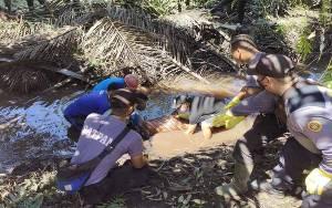 Perempuan 55 Tahun Ditemukan Tewas Tertelungkup di Parit Kebun Sawit Desa Penyang