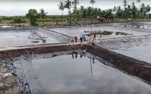 Analisis Teknis Tunjukkan Kawasan Shrimp Estate Suport Budidaya Vaname