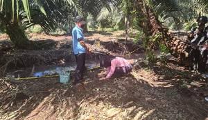 Suami Bunuh Istri: Pelaku Sempat Ikut Mencari Korban Sebelum Diketahui Tewas Terbunuh