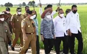 Gubernur Tinjau Infrastruktur Jalan di Desa Belanti Siam Pulpis