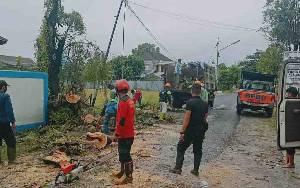 Pohon Tumbang Hantam Kabel Listrik, BPBD Lakukan Pembersihan