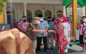 Pemprov Kalteng Salurkan Bantuan 24 Ekor Sapi Kurban ke Pemkab Barito Selatan