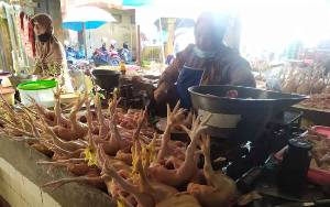 Harga Daging Ayam Kampung di Kobar Tembus Rp75.000