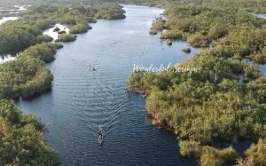 Menengok Keindahan Danau Sari di Desa Sungai Bakau