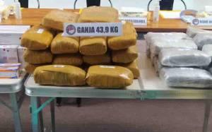 Polisi Gagalkan Peredaran 43,9 Kilogram Ganja