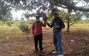 DKKP Sukamara Diminta Kembangkan Buah Durian di Agrowisata