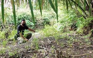 BKSDA Telusuri Keberadaan Buaya Berjemur di Tepi Sungai Sapihan