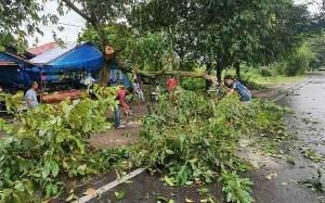 2 Orang Terluka Setelah Tertimpa Pohon Tumbang