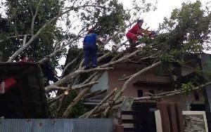 Pohon Tumbang Timpa Rumah Warga di Kelurahan Madurejo
