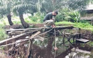 Pancing Buaya di Sungai Sapihan akan Digeser