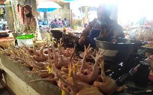 Harga Daging Ayam Pedaging di Kobar terus Bertahan di Rp38.000