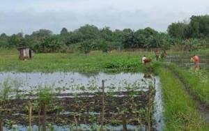 Daerah Rawan Banjir, Petani Harus Pahami Geografis Alam