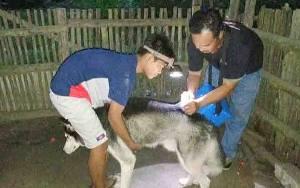 10 Kasus Gigitan Anjing di Barito Timur Sepanjang 2021, 2 yang Diperiksa Positif Rabies