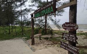 Pantai Seribu Cemara Destinasi Wisata Wajib Dikunjungi di Desa Sungai Bakau