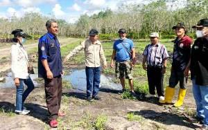 Distan, DinsosPMD dan Disnakertranskop UKM Tinjau Lahan Pertanian di Kelurahan Montallat
