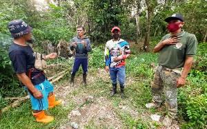 Orangutan di Bapanggang Raya Sudah Berbulan-bulan di Kebun Karet Warga
