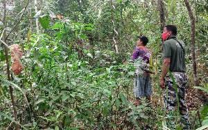 BKSDA Observasi Kemunculan Orangutan di Sekitar Balai Desa Bagendang Permai