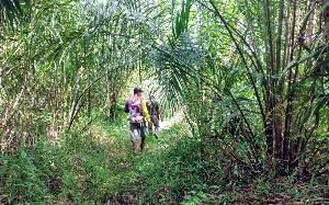 Orangutan di Bagendang Permai Tidak Ditemukan