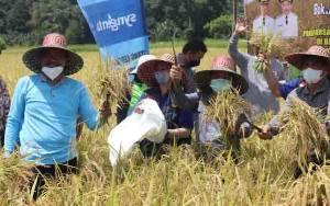 Bupati Barito Timur Dorong Petani Tingkatkan Luas Tanam Padi