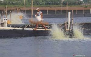 KKP Ingatkan Kebutuhan Akan Komoditas Perikanan di RI Meningkat