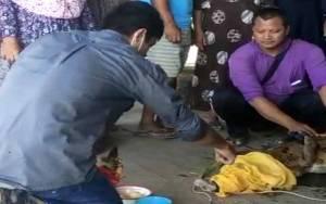 Buaya Kuning yang Ditangkap Warga Desa Luwuk Kiri Akhirnya Dilepas
