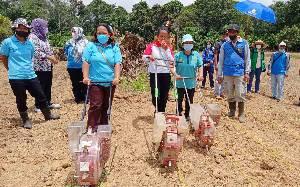Pemdes Malintut Barito Timur Berdayakan Kelompok Wanita Tani dengan Menanam Jagung
